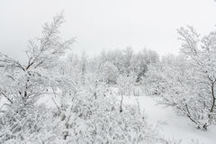 Beautiful snowsacpe Stock Image