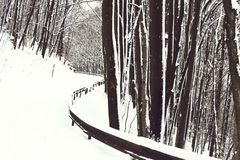 Beautiful snowy footpath or white road in winter forest, wood, deciduous trees and snow in mountains on wintertime. Outdoors on natural background stock images