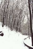 Beautiful snowy footpath or white road in winter forest, wood, deciduous trees and snow in mountains on wintertime. Outdoors on natural background stock photography