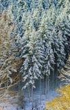 Beautiful snowy forest landscape, season concept Stock Photos