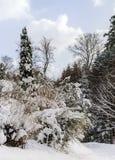 Beautiful snowy forest landscape, season concept Stock Images