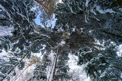 Beautiful snowy forest landscape, season concept Royalty Free Stock Image