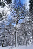 Beautiful snowy forest landscape, season concept Stock Image