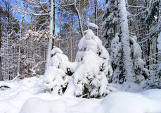 Beautiful snowy forest landscape, season concept Royalty Free Stock Photography