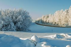 Beautiful snowy landscape. Coniferous forest near winter road