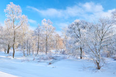 Beautiful snowy landscape by the Narew river valley. Royalty Free Stock Photography
