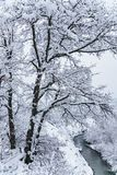 Beautiful snowy mountain forest and Afips river. Cloudy scenic winter landscape. West Caucasus. Vertical scenery.  royalty free stock image