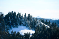 Beautiful snowy mountain french alps winter panoramic landscape with a fir forest view background Royalty Free Stock Photography