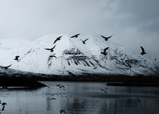 Beautiful snowy mountain with lake and flying birds stock photos