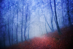 Beautiful snowy and rainy forest scene Stock Images