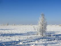 Beautiful snowy tree in field, Lithuania Stock Images