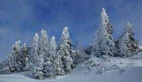 Beautiful snowy trees Royalty Free Stock Photography