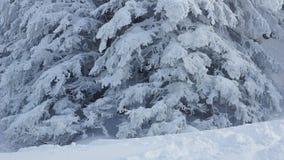 Beautiful snowy trees Stock Photo