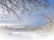 Beautiful snowy trees Stock Image