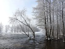Channel and snowy trees in winter, Lithuania Stock Photography