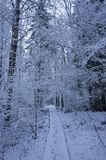 Beautiful snowy trees and forest in Sweden Scandinavia at dusk evening Royalty Free Stock Images