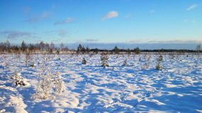 Beautiful snowy trees , Lithuania Royalty Free Stock Image