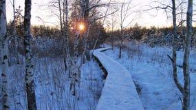 Beautiful snowy trees , Lithuania Royalty Free Stock Photos