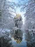 River Sysa and snowy trees in winter , Lithuania Royalty Free Stock Photo