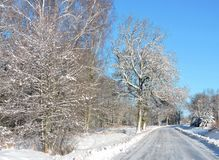 Road and beautiful winter trees, Lithuania Royalty Free Stock Photo