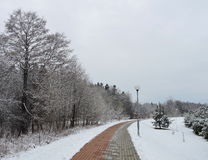 Beautiful snowy trees and path , Lithuania Royalty Free Stock Photos