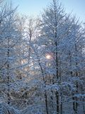 Beautiful snowy trees in winter, Lithuania Stock Photos