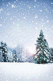 Beautiful and snowy winter forest background Stock Image