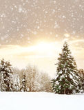 Beautiful and snowy winter forest background Royalty Free Stock Photography