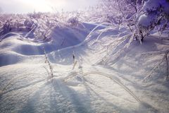 Beautiful snowy winter landscape. Icy tree branches and bushes stock photos