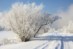 Beautiful snowy winter landscape. In Russia royalty free stock photography