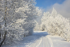 Beautiful snowy winter landscape. In Siberia royalty free stock images