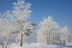 Beautiful snowy winter landscape. In Siberia royalty free stock image