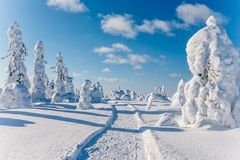 Beautiful snowy winter landscape. Snow covered fir trees on the background. Finland, Lapland stock photos