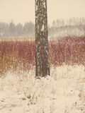 Beautiful snowy winter landscape with trees - aged photo Royalty Free Stock Images