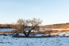 Beautiful snowy winter landscape Stock Images