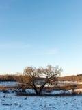Beautiful snowy winter landscape Royalty Free Stock Image
