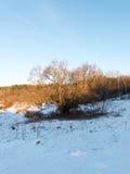 Beautiful snowy winter landscape Stock Image