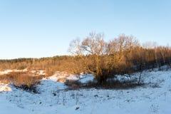Beautiful snowy winter landscape Stock Photos