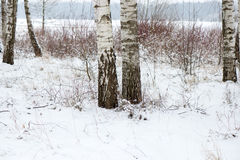 Beautiful snowy winter landscape with trees Stock Photos