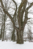 Beautiful snowy winter landscape with trees Royalty Free Stock Images