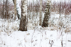 Beautiful snowy winter landscape with trees Stock Photo