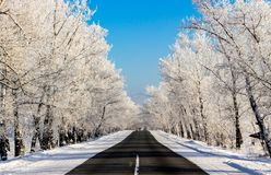 Beautiful snowy winter road in the forest on sunny day Royalty Free Stock Photography