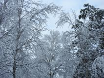 Beautiful snowy winter trees, Lithuania Royalty Free Stock Images