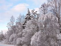 Beautiful snowy winter trees, Lithuania Royalty Free Stock Photography