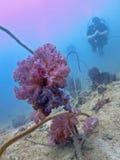 Beautiful soft coral stock photo