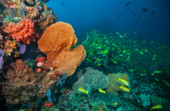 Beautiful soft coral reef in Indian ocean, Maldives. Underwater life and ecosystem Stock Photography