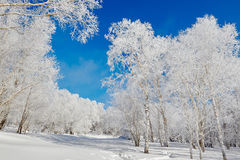 The beautiful soft rime scenery Royalty Free Stock Photos