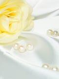 Beautiful soft white rose Stock Photo