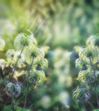 Beautiful softness flower - fluffy flower Royalty Free Stock Photo