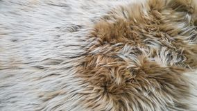 White and brown wool. Beautiful softness of white and brown sheep wool royalty free stock photos